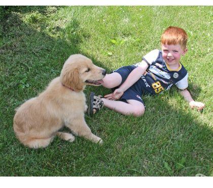 Photos Vivastreet Vaincre la peur des chiens Cynophobie