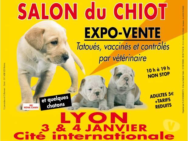 salon du chiot lyon le 03 et 04 janvier 2015 achat ForSalon Du Chiot Lyon