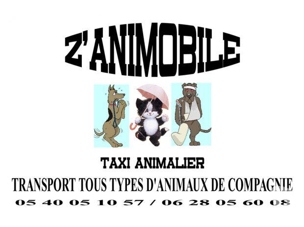 Photos Vivastreet Z 'ANIMOBILE Taxi animalier Gironde 33 Begles