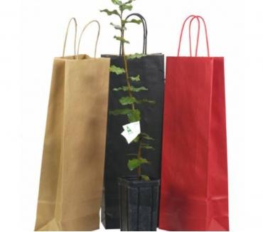 Photos Vivastreet Pour noël : 1 chêne truffier : 1 idée de cadeau originale