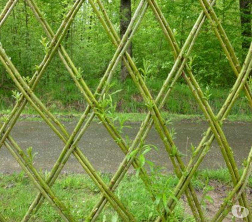 Haut-Rhin Colmar - 68000 - Photos Vivastreet PLANTS DE SAULE