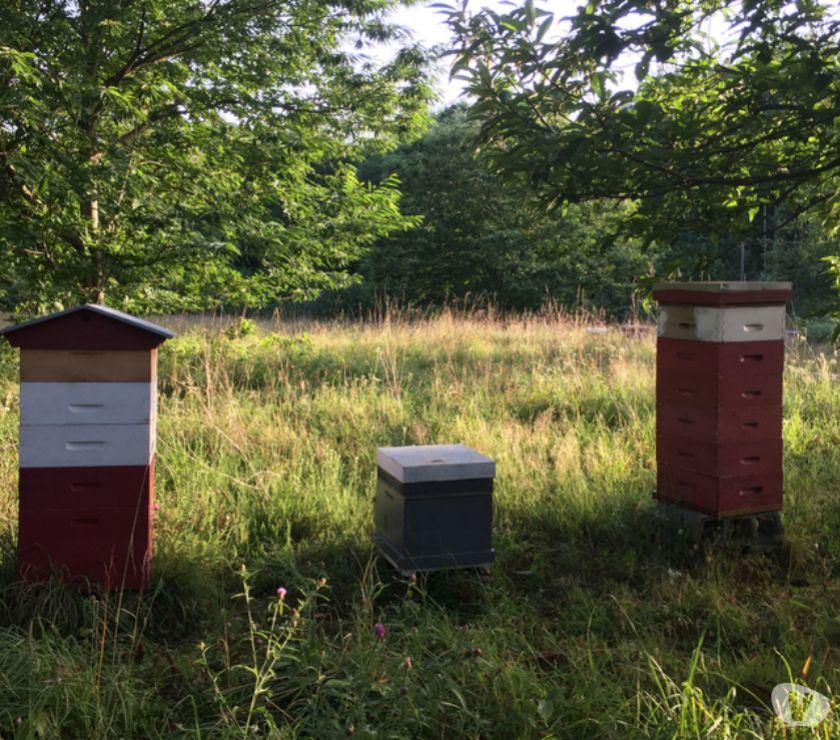 Autres cours Seine-Maritime Rouen - Photos Vivastreet Journée d'information abeilles, apiculture