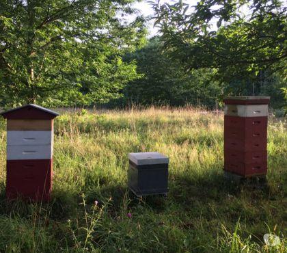 Photos Vivastreet Journée d'information abeilles, apiculture