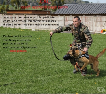Photos Vivastreet CAC coache apprentissage canin