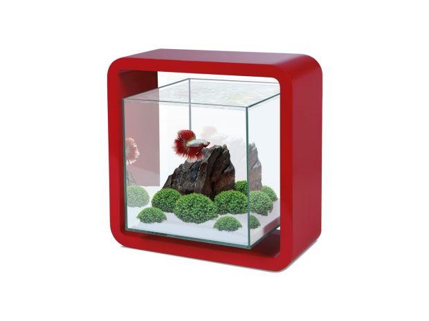 Services, accessoires animaux Seine-et-Marne Guerard - 77580 - Photos Vivastreet Aquarium Nano Cube 5L