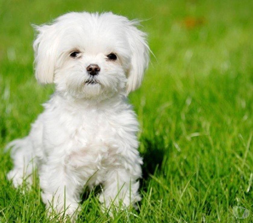 Services, accessoires animaux Hérault Vias - 34450 - Photos Vivastreet Garde votre petit chien