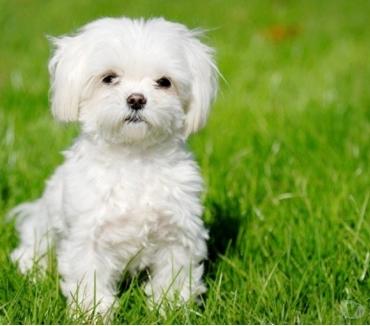 Photos Vivastreet Garde votre petit chien