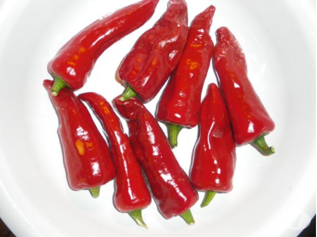 Photos Vivastreet graines de piment Gorria (type espelette)