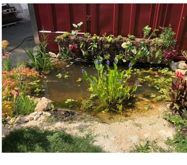 Photos Vivastreet Sphaigne pour mur végétal