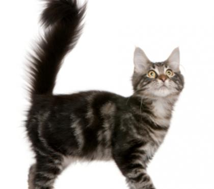 Photos for CAT GROOMER