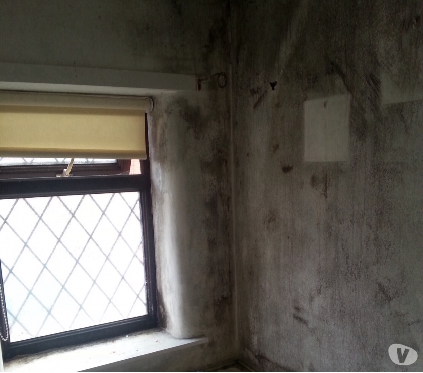 Find a tradesman Manchester County Salford - Photos for mould and condensation