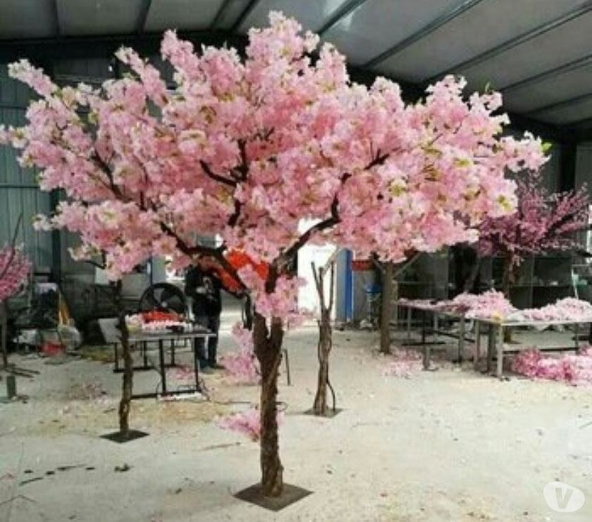 Event Planning & Catering Aberdeenshire Aberdeen - Photos for Blossom Trees are on Sale