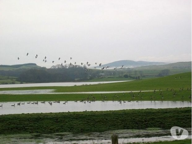 Photos for GOOSE & DUCK SHOOTING DUMFRIES & GALLOWAY SCOTLAND