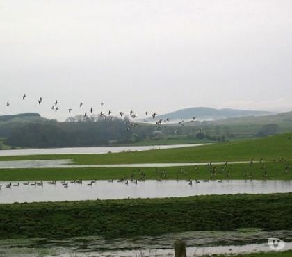 Photos for INLAND GOOSE & DUCK SHOOTING DUMFRIES & GALLOWAY SCOTLAND