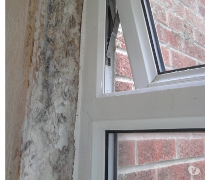 Photos for black mould specialist