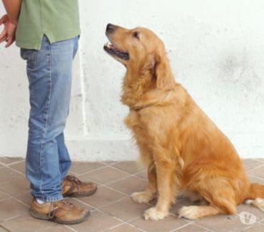 Foto di Vivastreet.it Avvia agenzia di servizi per animali