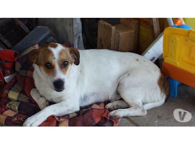 Regalo cane maschio di piccola taglia ampezzo adozione for Regalo offro gratis