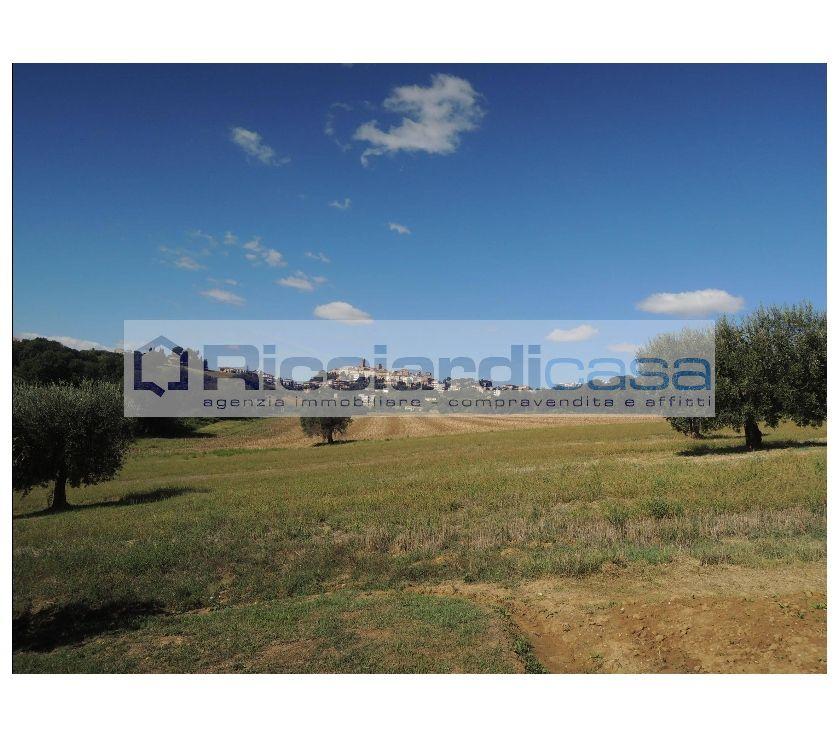 """rustici e terre in affitto Ascoli Piceno e provincia Sant'Elpidio a Mare - Foto di Vivastreet.it Sant'Elpidio a Mare """"TERRENO AGRICOLO"""""""