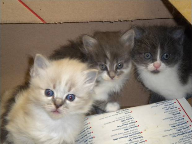 Animali in adozione gorla minore cuccioli in regalo for Regalo offro gratis