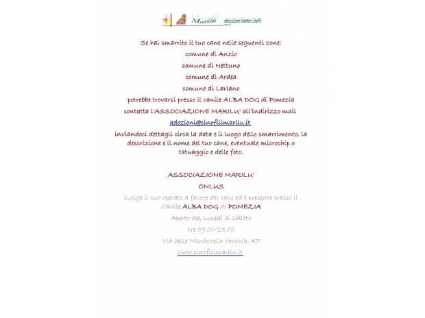 persi e ritrovati| ricerca cani e gatti smarriti Roma e provincia Pomezia - Foto di Vivastreet.it canile di Pomezia, sei hai smarrito il tuo cane contattaci