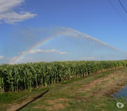 Foto di Vivastreet.it Azienda Agricola - Grosseto