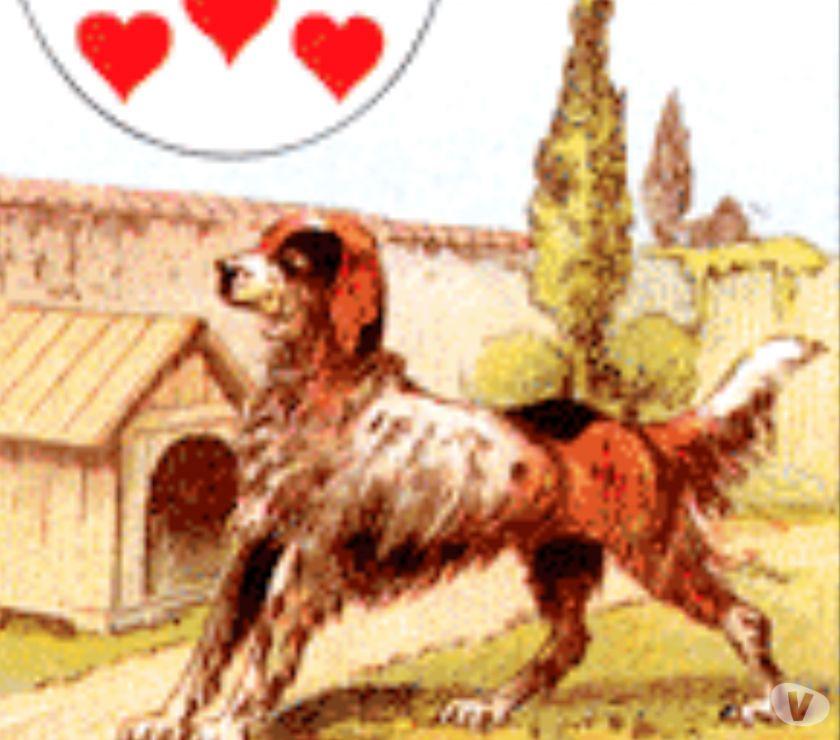 Astrologia - Cartomanzia Palermo e provincia Palermo - Foto di Vivastreet.it Leo cartomante primo consulto gratuito 3382250226