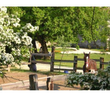 Foto di Vivastreet.it Ospitalità e Cavalli in Ossola