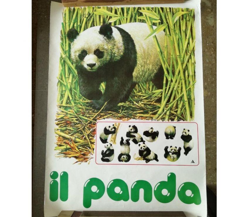 Collezionismo - Libri Matera e provincia Matera - Foto di Vivastreet.it POSTER IL PANDA