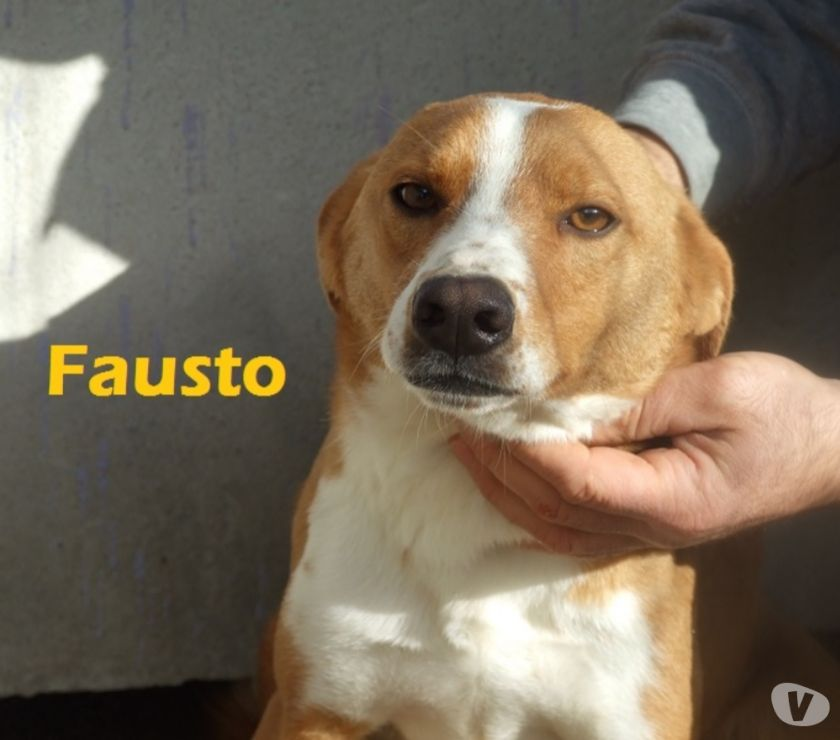 Foto di Vivastreet.it Fausto è una taglia media