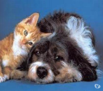 Foto di Vivastreet.it Allevamento Cani ricovero e pensione anche Gatti e piccoli a