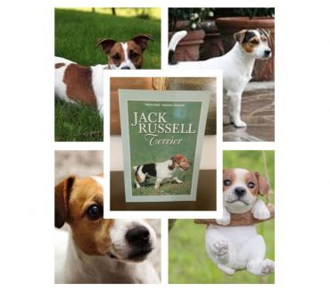 Foto di Vivastreet.it JACK RUSSELL Terrier, V. Rossi – F. Tarasconi, Ed. Olimpia.