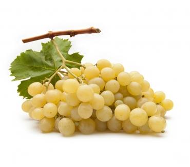 Foto di Vivastreet.it azienda vitivinicola importante, vendita