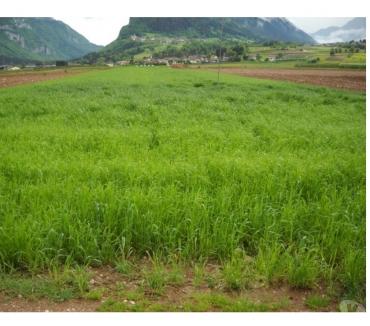 Foto di Vivastreet.it Terreno agricolo con irrigazione