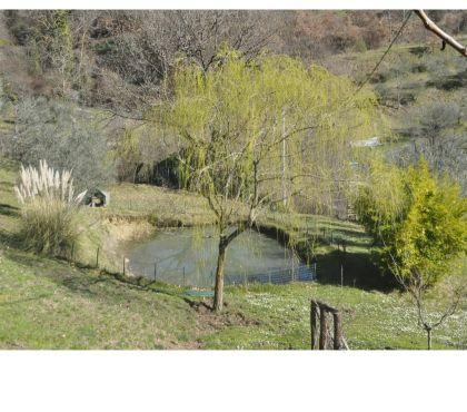 Foto di Vivastreet.it Subbiano Montegiovi terreno mq.25000-lago-fabbricati-annessi