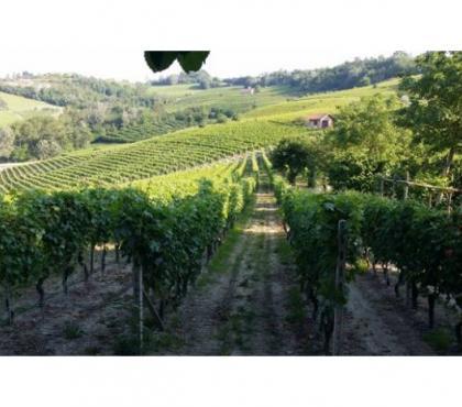 Foto di Vivastreet.it Azienda Agricola Mista zona Nizza M.to
