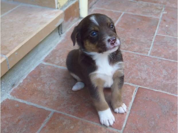 Regalo cuccioli di cane taglia media serravalle pistoiese for Regalo offro gratis