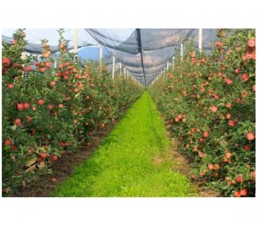 Foto di Vivastreet.it Produrre Frutta