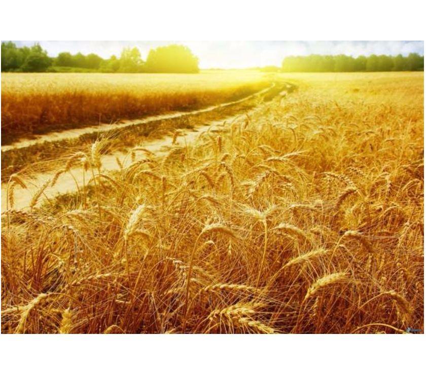 Foto di Vivastreet.it Terreno Agricolo tra MI e VA