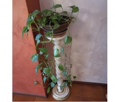 Foto di Vivastreet.it Colonna in legno a spirale da arredamento