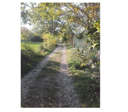 Foto di Vivastreet.it terreno agricolo di 5000 mq