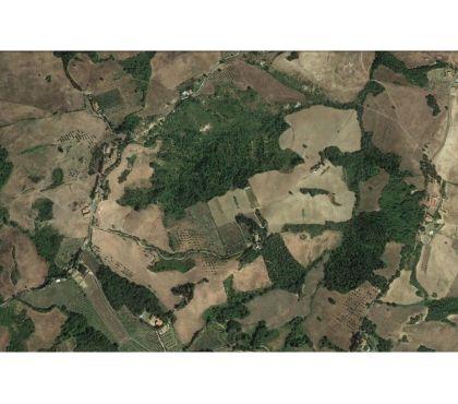 Foto di Vivastreet.it Azienda Agricola in provincia di Pisa