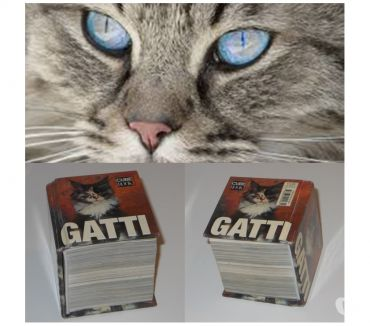 Foto di Vivastreet.it GATTI, CUBE BOOK, EDIZIONI WHITE STAR 2006.