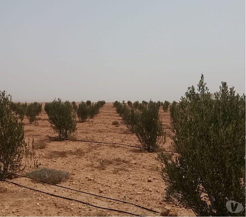 Photos pour Ferme au région de chichaoua