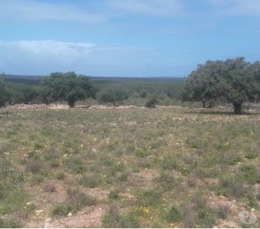 Photos pour Terrain à El Hrarta