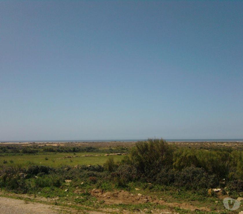 Terrain à Vendre Essaouira - Photos pour Terrain 11.000 m2 , vue sur mer, titre, plan